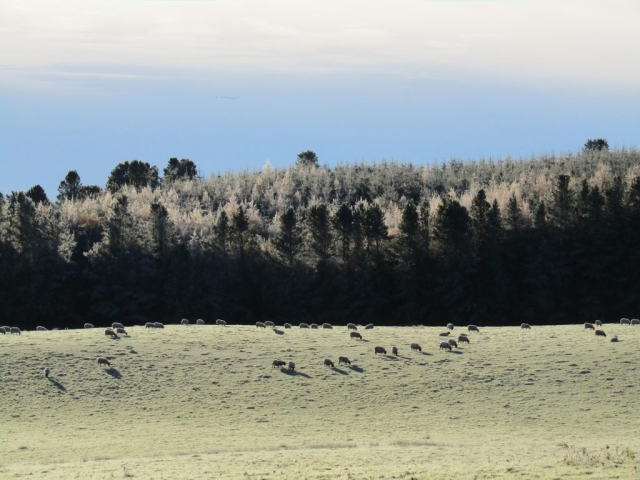 A frosty day near Dunblane - a day trip as part of learning English