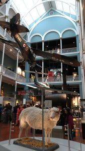 Museum of Scotland - visit Edinburgh