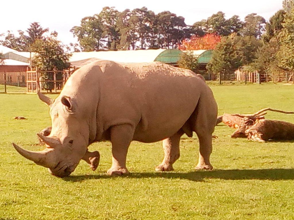 safari park - english language homestay