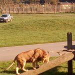 safari park, english language homestay