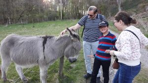 donkey, family english course